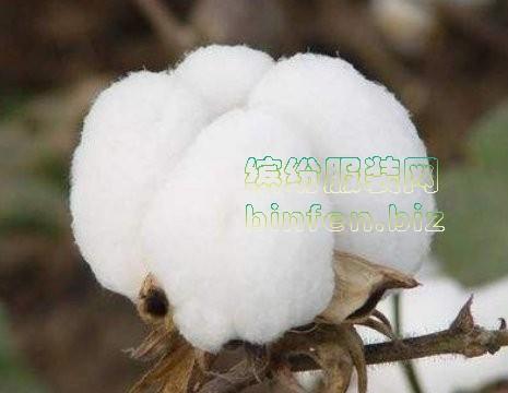 棉花的生产、收获,棉布的基础知识