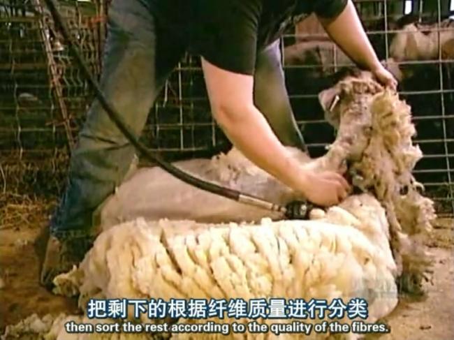 工厂生产织造羊毛布料的流程