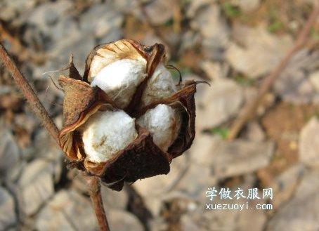 为什么看起来一样的棉布棉被,实际上质量区别非常大?